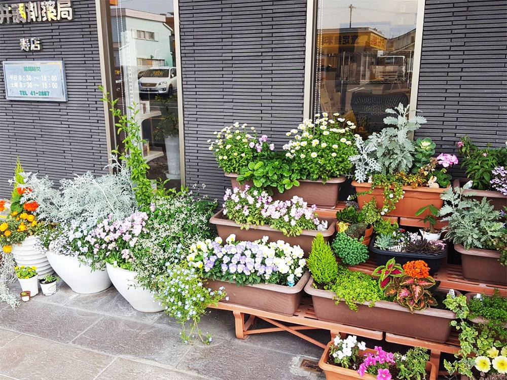 写真:お花が沢山寿店
